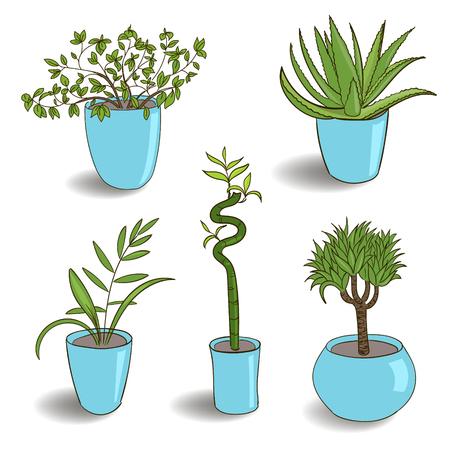 Ensemble de plante d'intérieur isolé. Illustration de pot de plante de maison de croquis coloré de vecteur