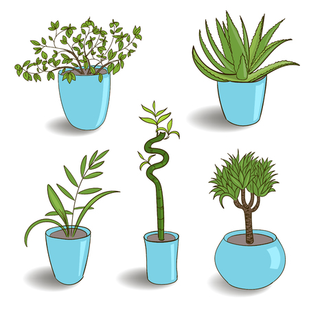 Set of house plant isolated. Vector colorful sketch house plant pot illustration