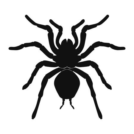 Tarantula spider silhouette isolated on white background. Vector illustration