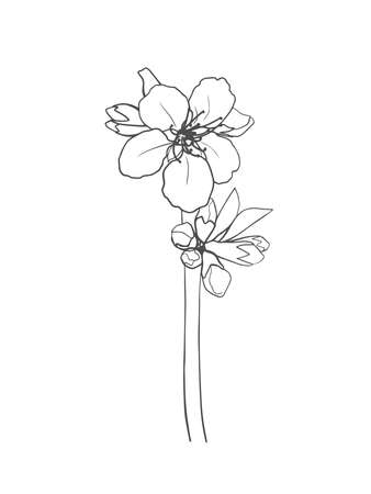 Hand-drawn cherry blossom isolated on white background. Vector illustration