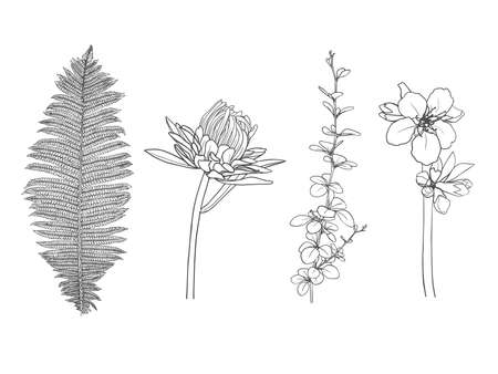 Hand-drawn floral elements isolated on white background. Vector illustration