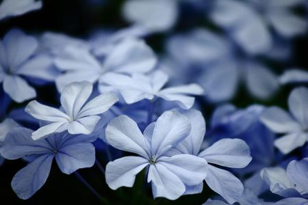 trabajo manual: Flowers in Asia Foto de archivo
