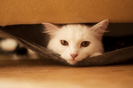 Cat inside a sofa Stock Photo