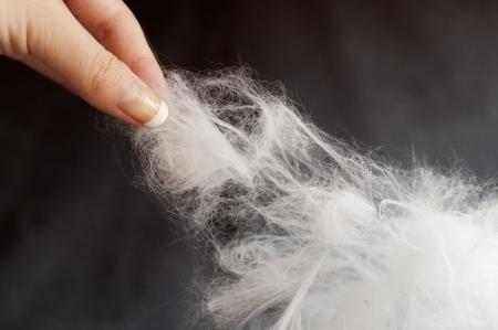 hair problem: Cat hair