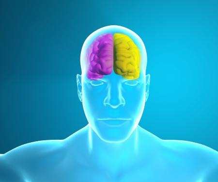 brain works: Brain how it works
