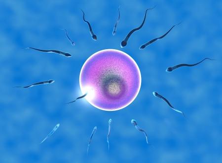 Konzeption, Eizelle und Spermien unter dem Mikroskop angesehen