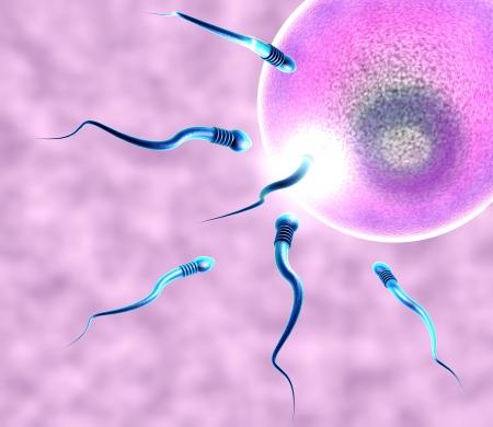 relaciones sexuales: Concepción, óvulo y el espermatozoide se observa bajo el microscopio