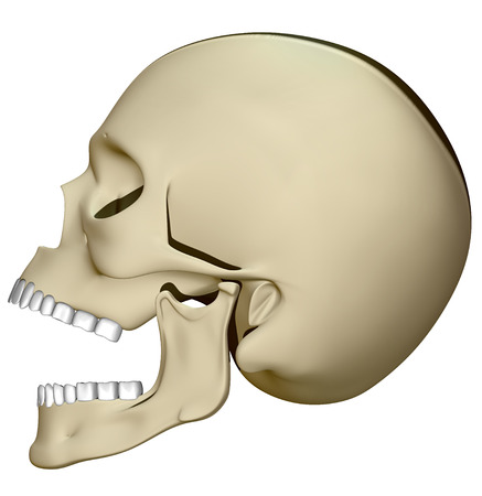 Skull viewed from the side with his mouth open Stock Photo