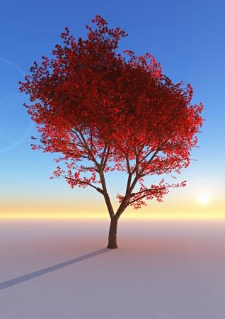 Colorful Autumn tree Stock Photo