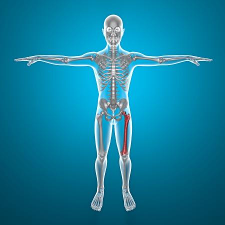 tarsus: Raggi X del corpo umano e scheletro con dolore in gamba