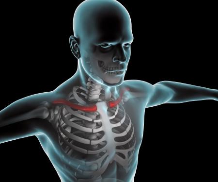 tarsus: Raggi X del corpo umano e scheletro, clavicola