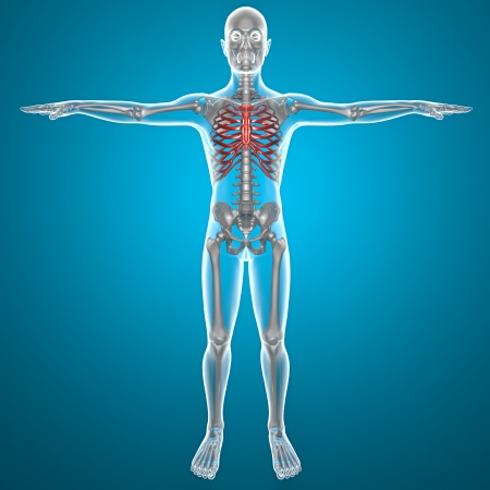 collarbone: X-ray thorax