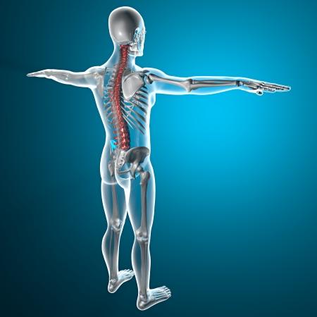 Spine x-ray csontváz