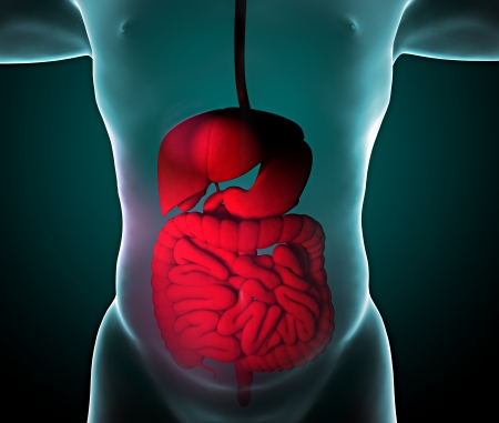 Man and X-ray of the digestive system, intestines Stock Photo - 23540669