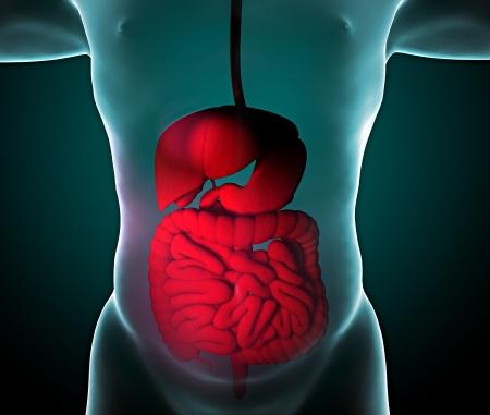 Man i X-ray z układu pokarmowego, jelita