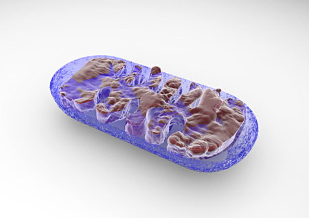 membrana cellulare: Sezione di una cella mitocondrio visto dal microscopio Archivio Fotografico