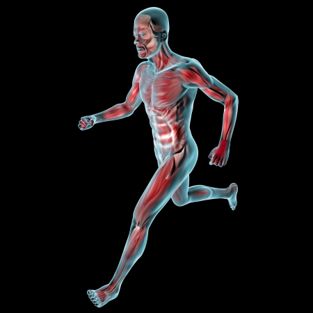 Running man muscles anatomy system