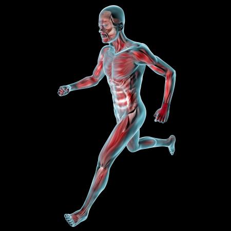 Running man Muskeln Anatomie System Standard-Bild