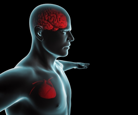 Human body with heart and brain x-ray Stock Photo