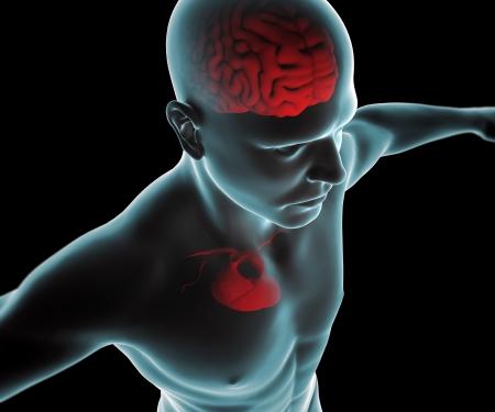 brain shape: Human body with heart and brain x-ray Stock Photo