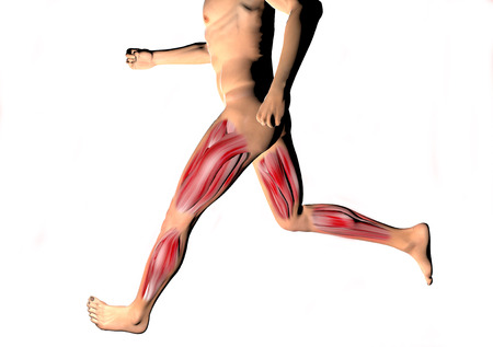 ligaments: Man running and thigh muscles and calves seen on x-rays