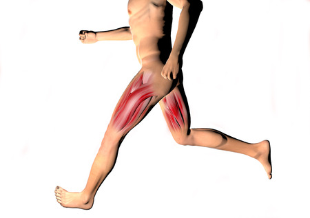 Man running, the muscles of the thigh seen on x-rays photo