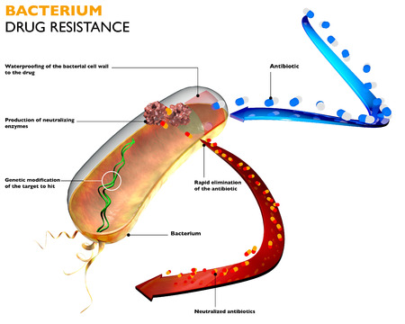 Resistance of bacteria to antibiotics  The action of bacteria against drugs