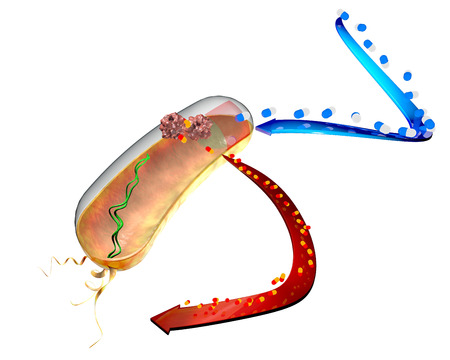 neutralize: Resistance of bacteria to antibiotics  The action of bacteria against drugs