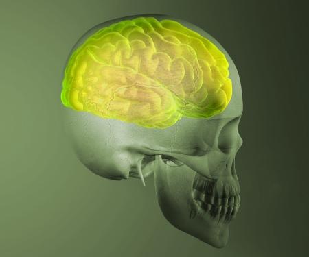 resilient: Brain skull x-ray head anatomy