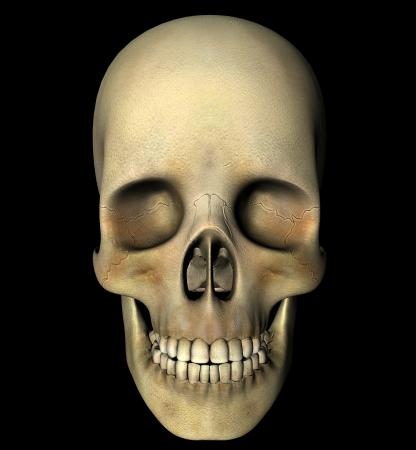 chew over: Skull anatomy head Stock Photo