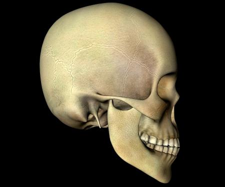 chew over: Skull anatomy head profile Stock Photo