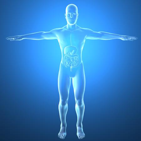 El hombre delgado, de rayos x, sistema digestivo Foto de archivo