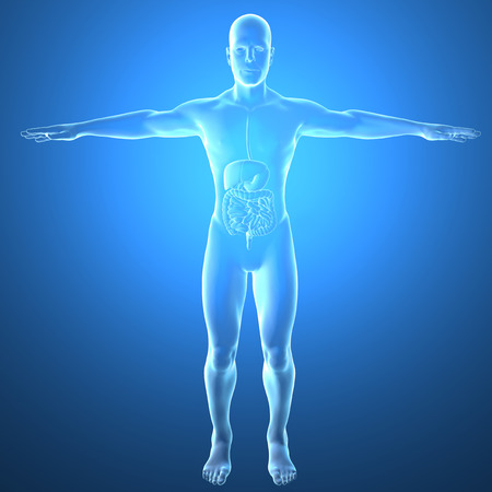 bowel: Man intestine, x-ray, digestive system Stock Photo