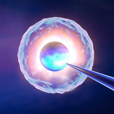 A petesejt mesterséges megtermékenyítés Stock fotó