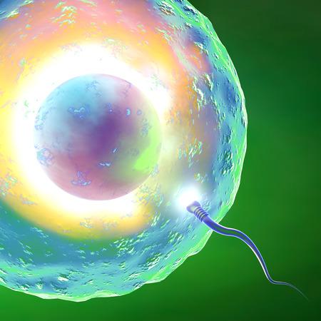ovario: Óvulo y el espermatozoide Concepción Foto de archivo