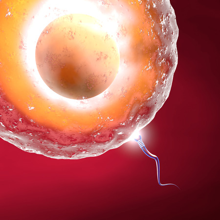 in vitro: Óvulo y el espermatozoide Concepción Foto de archivo
