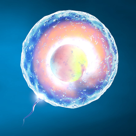 ejaculation: Conception ovum and sperm