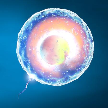 Konzeption Ei-und Samenzellen