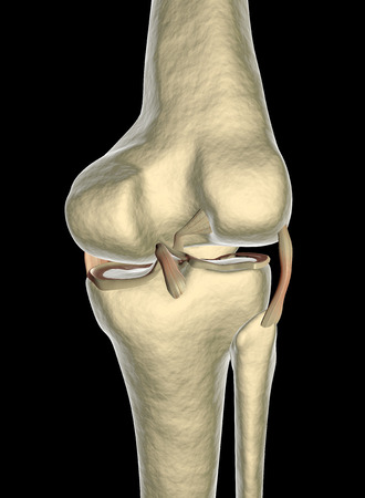 tendons: Knee ligaments, tendons, x-ray
