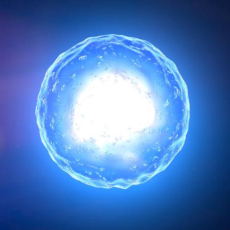 sex cell: Cell nucleus, ovum, fertilization