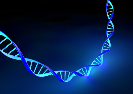 synthesize: Stranded DNA molecules