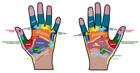 palm reading: Reflexology handheld, hands, palms, health, massage  Illustration