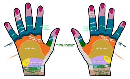 Reflexology handheld, hands, backs, health, massage Illustration