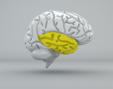 lobe: Brain, temporal lobe, division Stock Photo