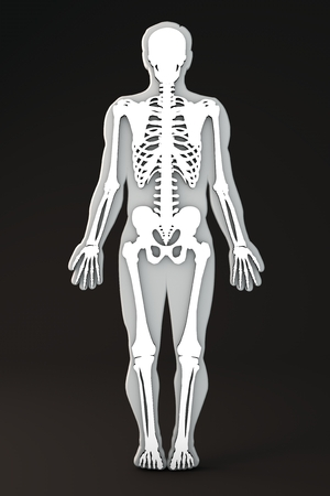 Section of the human body bones and skeleton stock photo picture section of the human body bones and skeleton stock photo picture and royalty free image image 29347322 ccuart Choice Image