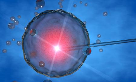 Komórka jajowa, sztuczne zapłodnienie sztuczne