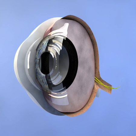 Section of an eye  photo