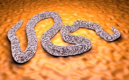 Ebola-Virus unter dem Mikroskop Gefahr Ansteckung Epidemie Standard-Bild