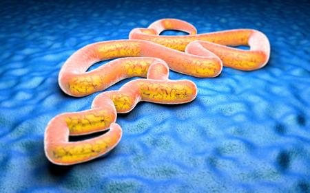 Ebola vírus mikroszkóp alatt veszélyt fertőzési járvány Stock fotó