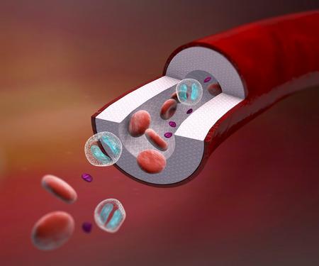 Sección de los vasos sanguíneos de la arteria, vena, células rojas de la sangre. Sección de una composición de la vena y la sangre Foto de archivo - 33150236